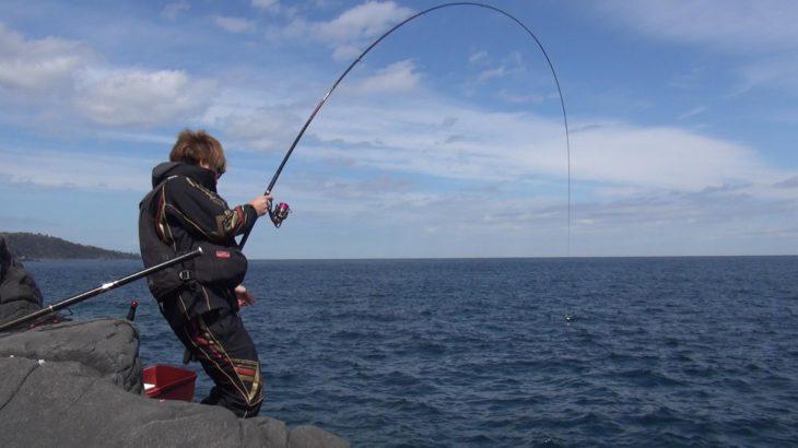 【釣行記】チヌは釣れん。グレに慰めておっと・・。伊豆半島 城ケ崎 モズガネ