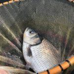 1月の円良田湖でヘラブナ釣り!長竿チョーチンが面白い!短時間釣行ながらもまずまずの釣果でした♪