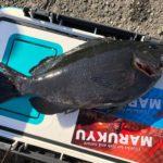【釣研インセンド】1月の南伊豆 入間 沖磯 「加賀根」でメジナ狙い!40㎝オーバーもまじり、短時間でも楽しめました♪