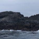 下田沖・横根に潜むオオカミ(巨大シマアジ)を釣りたい!垂らし釣り・フカセ釣り・カゴ釣り 一番いいのはどの釣法なのか??